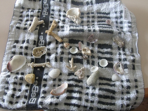 Shells from the beach!