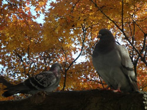 I looked up while I was taking these pictures, and these guys were just chilling....sitting there and staring at me!